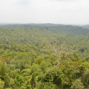 Restore Rainforest