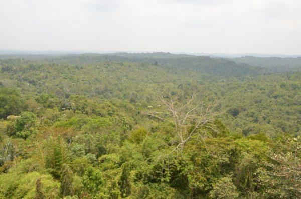Restore Rainforest