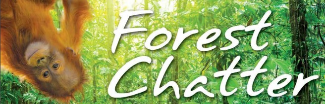 Forest Chatter December 2011