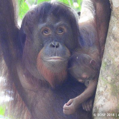 Bukit Batikap's Baby Bonanza