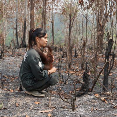 Forest Chatter December 2015