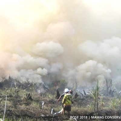 Mawas Team Conquer Fire After 3 Day Battle